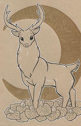 Stag and Ladie's Mantle 5x7 Art Print
