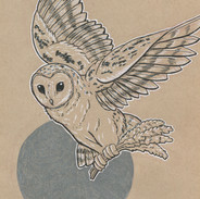 Lavender Owl