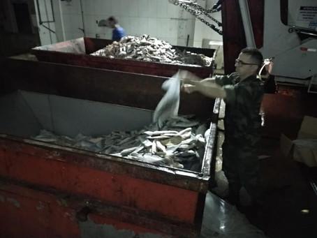 Polícia Ambiental prende uma tonelada de pescados no bairro Progresso em Laguna.