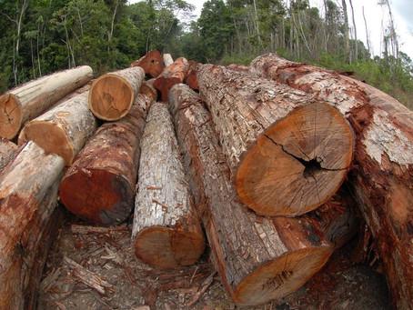 Tora de madeira cai na perna de Portuário durante operação no porto de Imbituba