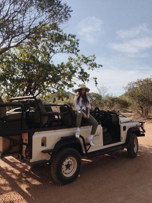into the wild: an african safari