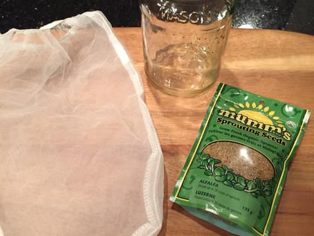 Sprouting Alfalfa at HOME!