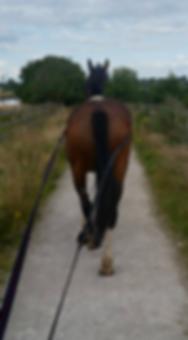 long reining.png