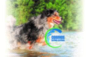 main dog w logo.jpg