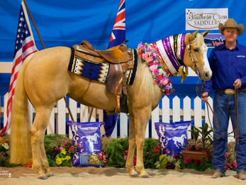 Lilmissnoitall Proven Power at the 2017 QRHA State Reining Show