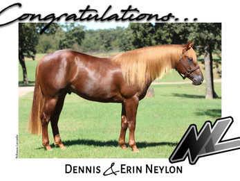 """MAGNUM CHIC DREAM COLT """"One Sensational Dream"""" Acquired by Neylon Performance Horses"""