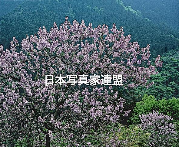 197041長野巧 紫彩HP用.jpg
