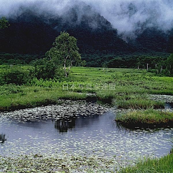 196023村上治義 池塘のコピー.jpg