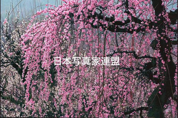表紙の写真・田中均・会員HP用.jpg
