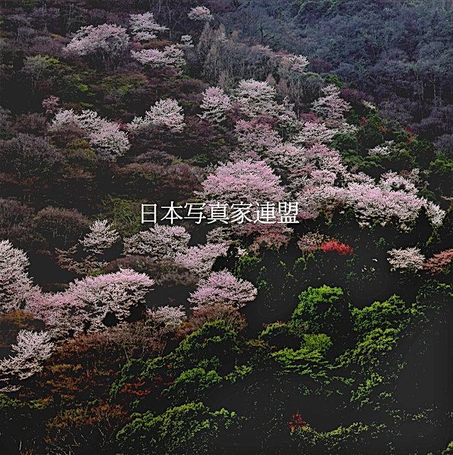 199059安藤晋二 山里の春HP用.jpg
