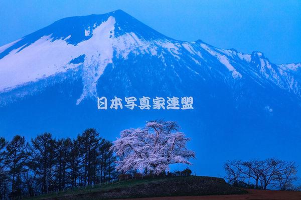 日本写真家連盟