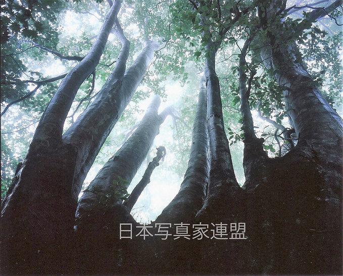 心に残った風景「未来へ」飯田恒弘氏ホームページ用.jpg