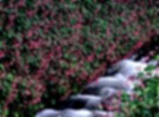 5月18日例会 初谷裕子 紅色染まる.jpg