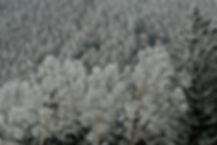 玉川修②霧の花咲く.jpg