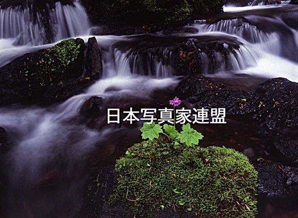 表紙の写真 西木輝子氏 HP用.jpg