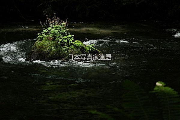 表紙の写真・善宝会員HP用.jpg