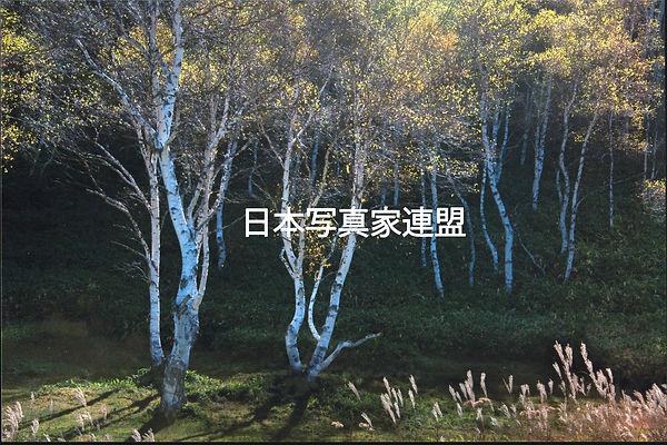 吉田会員HP用.jpg