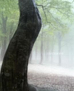 霧まとう森のコピー.jpg