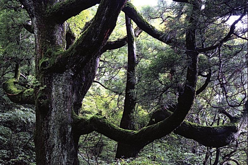 6月24日萩原講師例会永岡和子「紫峰の杉」.jpg