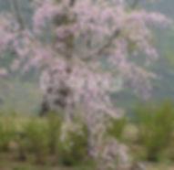 6月号会報 表紙の写真 和田 憲氏ロゴ入り.jpg
