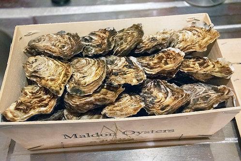Maldon Oysters (Dozen)
