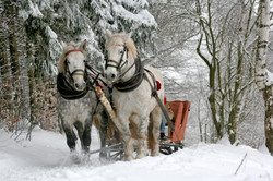 Canva - Horses in a Carriage