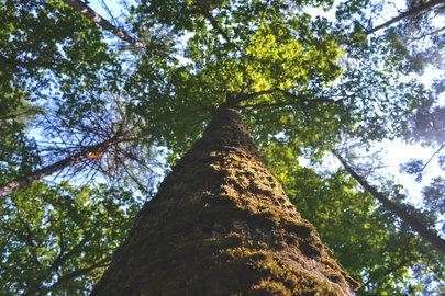 Canva - Low Angle Photo of Green Tree du