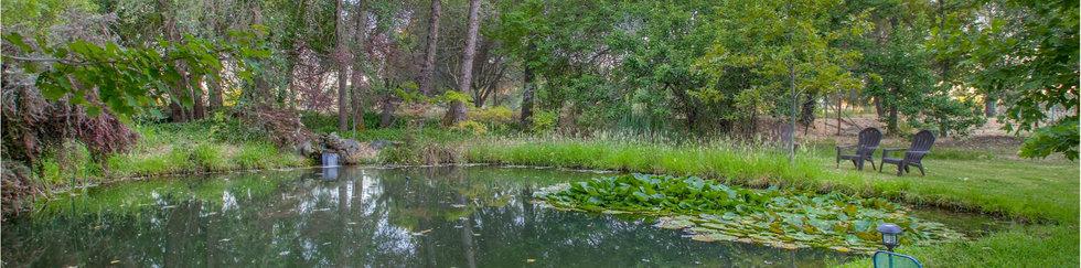 43 Back Pond.jpg