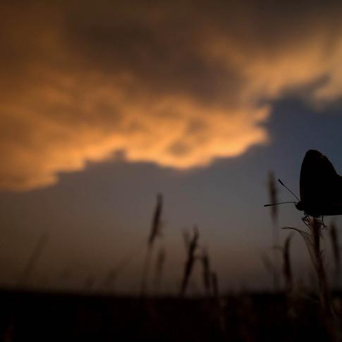 Tiny grass blue butterfly- coochbehar, India.