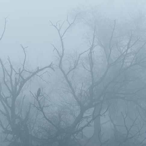 Indian darter- keoladeo national park, india.