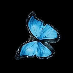Schmetterling_023.png