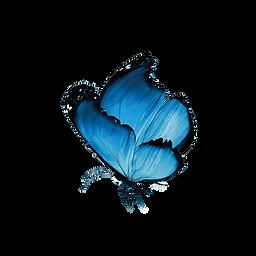 Schmetterling_024.png