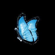 Schmetterling_022.png