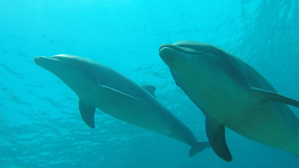 These beauties kept us company as we snorkeled