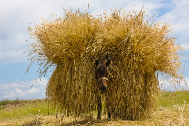 horse with hay Albania tourism