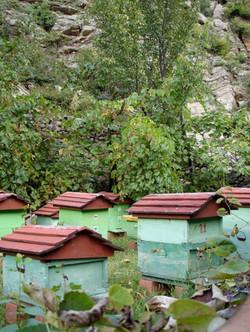 bees Albania tourism