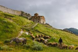 animals Albania tourism
