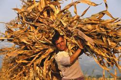 farmer Albania tourism