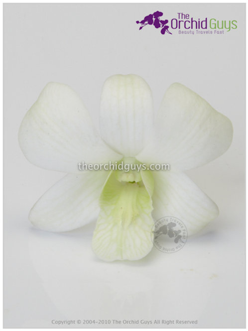 White 5N