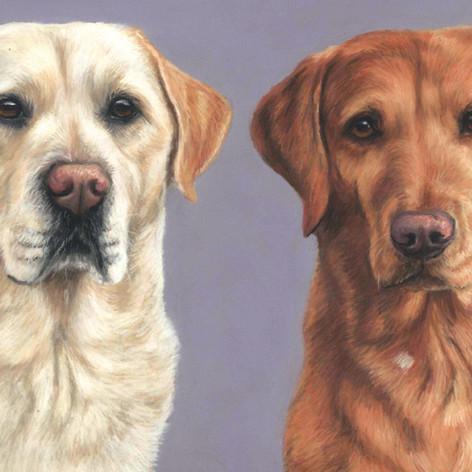 Bella and Buddy double labrador pet portrait.jpg