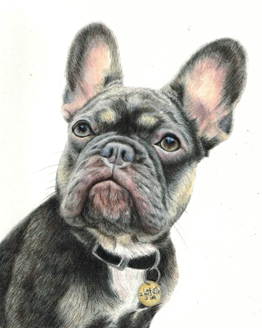 Dog portraits in coloured pencil. Scotch the French bulldog portrait. 10x8 inches on white pastelmat