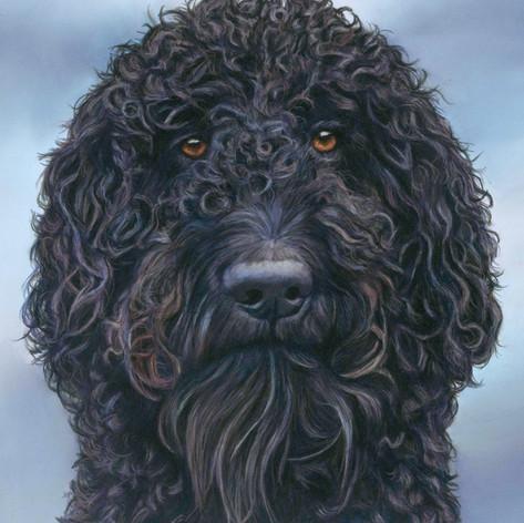 Ozzy dog portrait.jpg