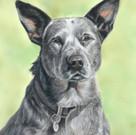 ACD, Dog Portrait.jpg