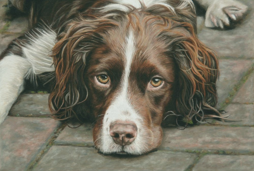Jasper, liver and white springer spaniel pastel pet portrait. Jasper is lying on paving slabs