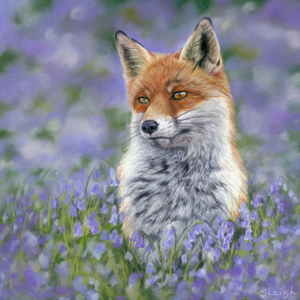 Amber, beautiful fox portrait with bluebells in the background