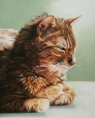 Applejack, cat portrait of ginger tabby, drying his fur in the sun on a gren background