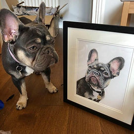 Scotch the French Bulldog with his Pet Portrait