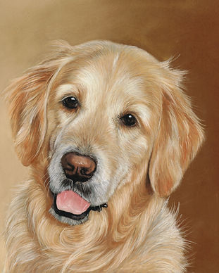 Archie, 10x12 dog portrait of a golden retriever called Archie. Painted in pastels on a brown background