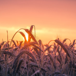 Even when the field of life looks dry and worthless, God has plans for a harvest
