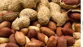 Especial arraiá: amendoim, o poderoso da vez